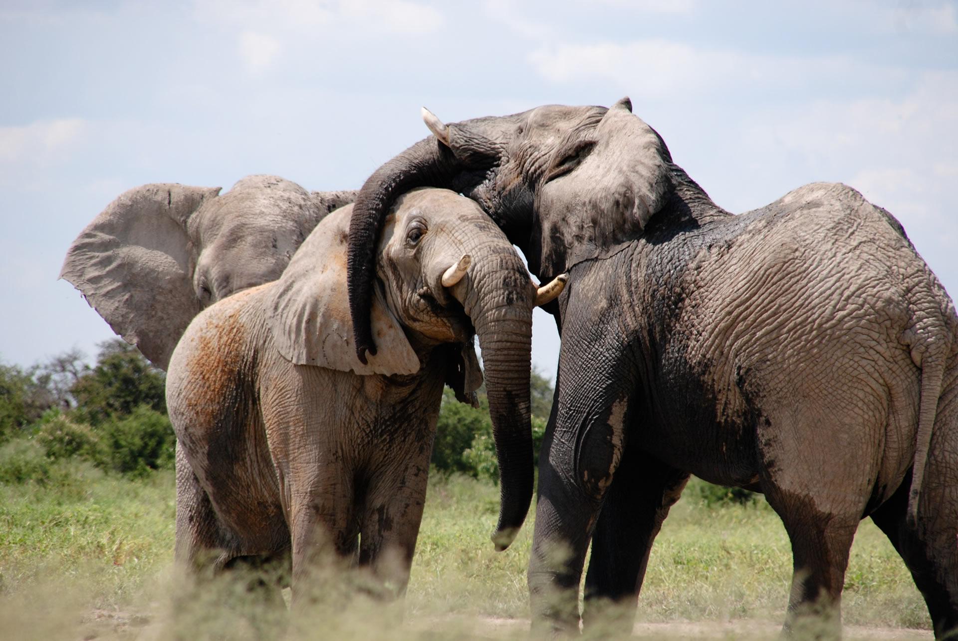5 Days Big 5 Safari