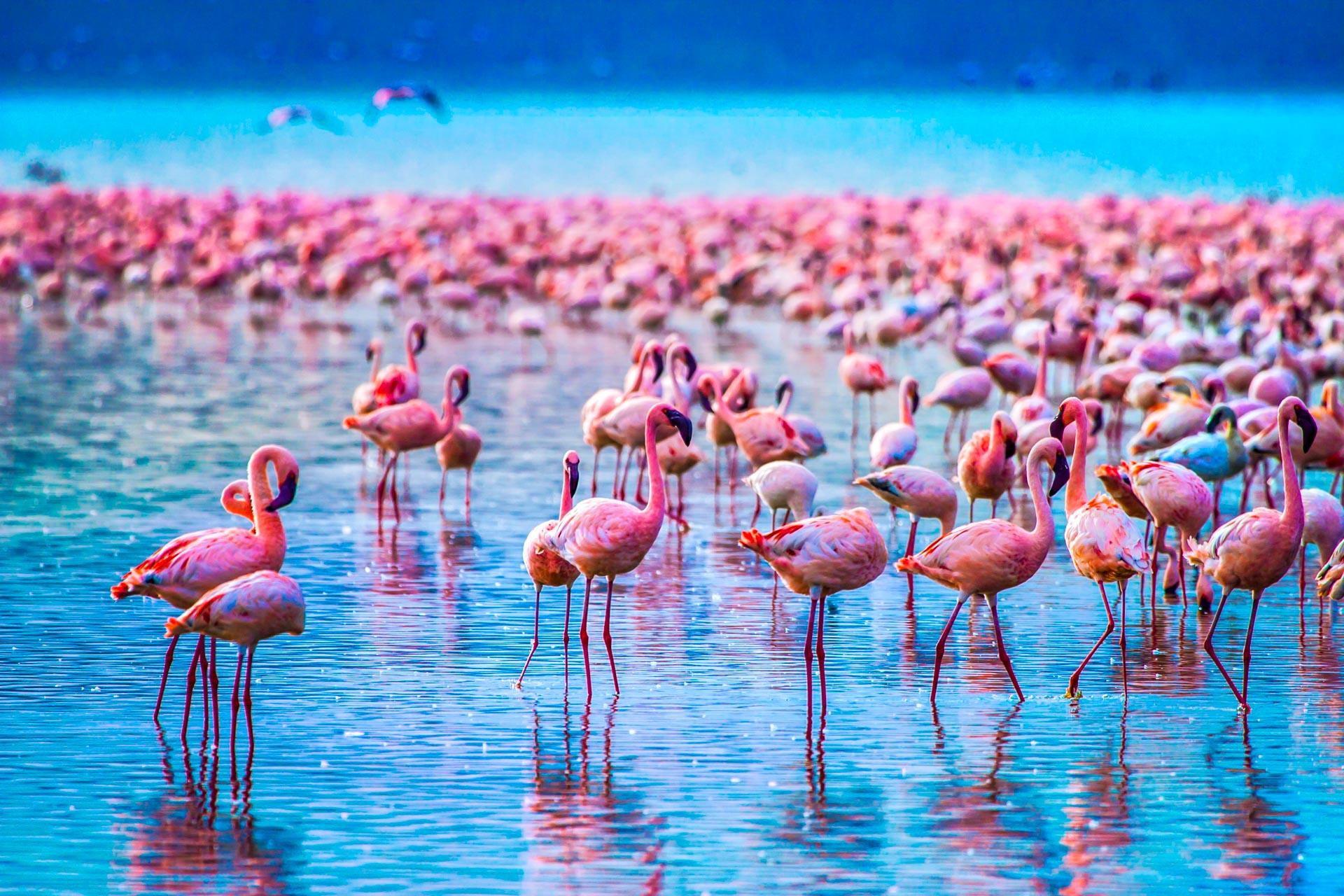 1 Day Lake Manyara