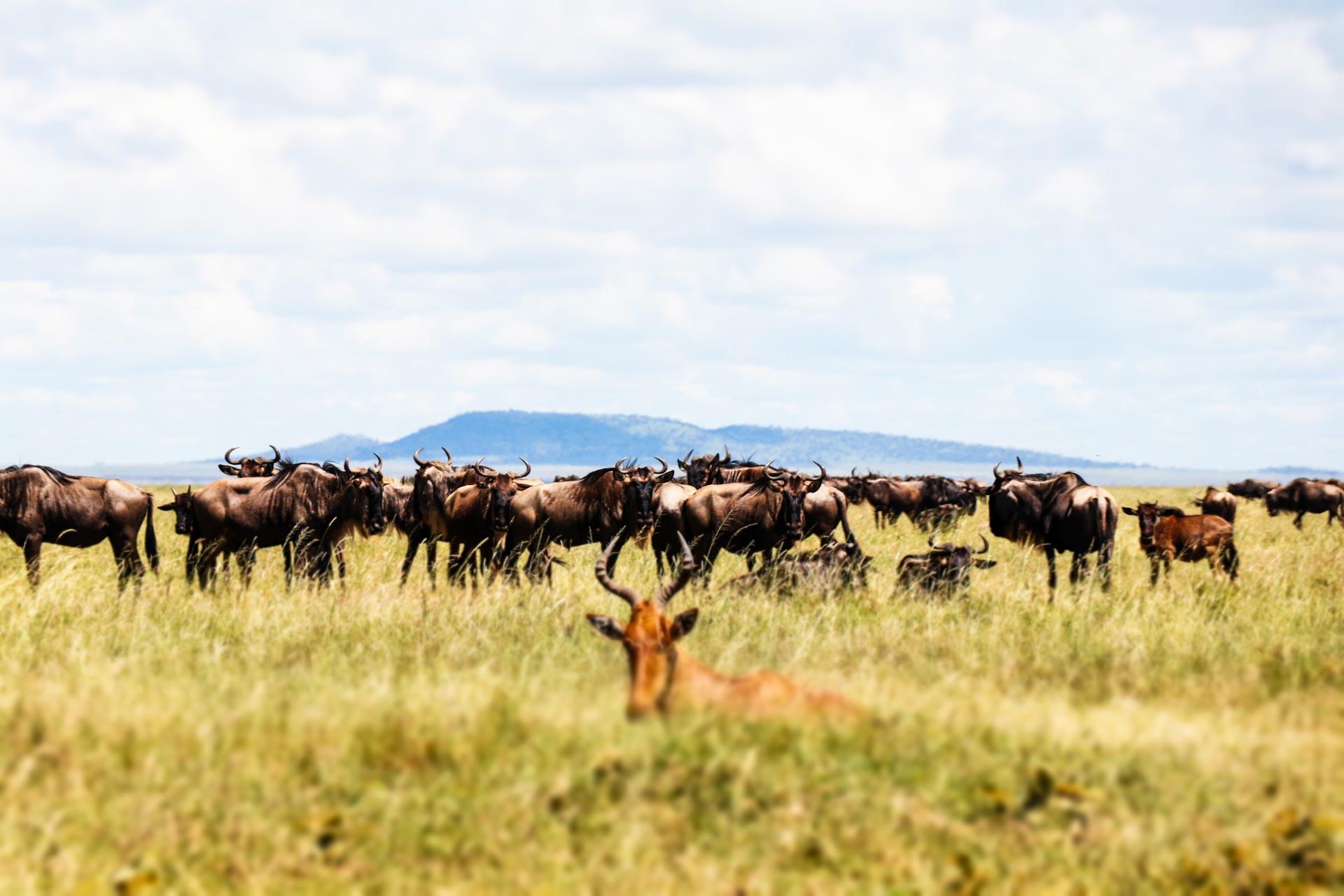 8 Days Kogatende Migration Safari