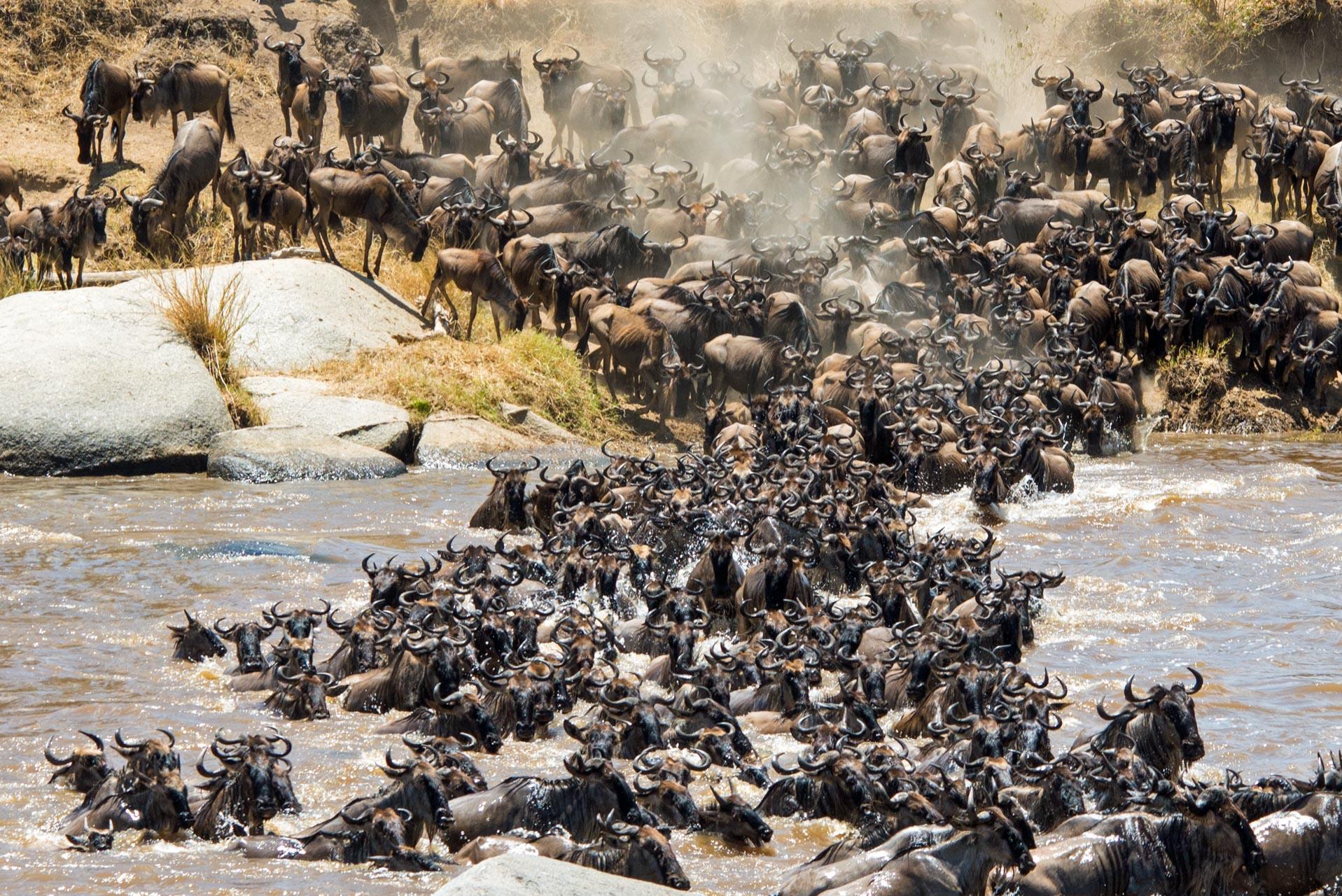 Ultimate 7 Days Migration Safari