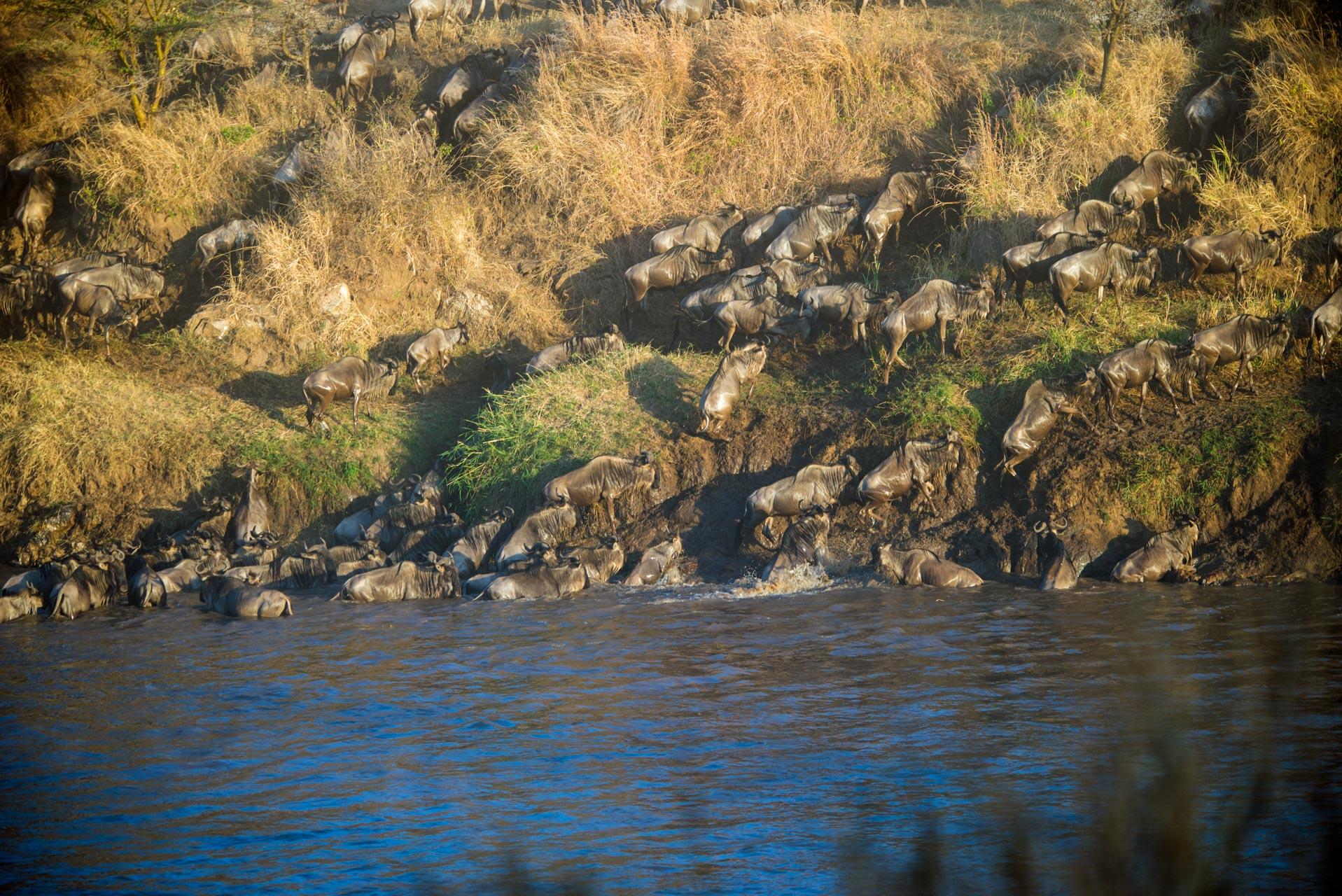 6 Days Kogatende Migration Safari