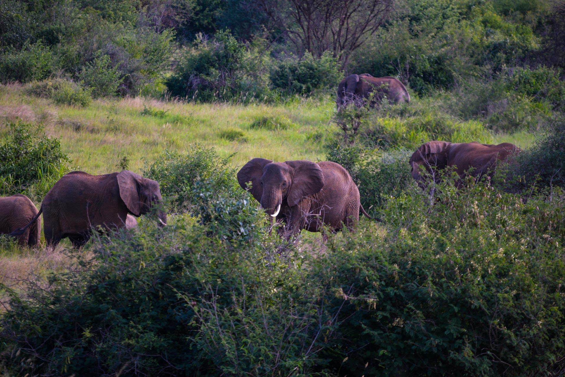 2 Days Tanzania Short Safari