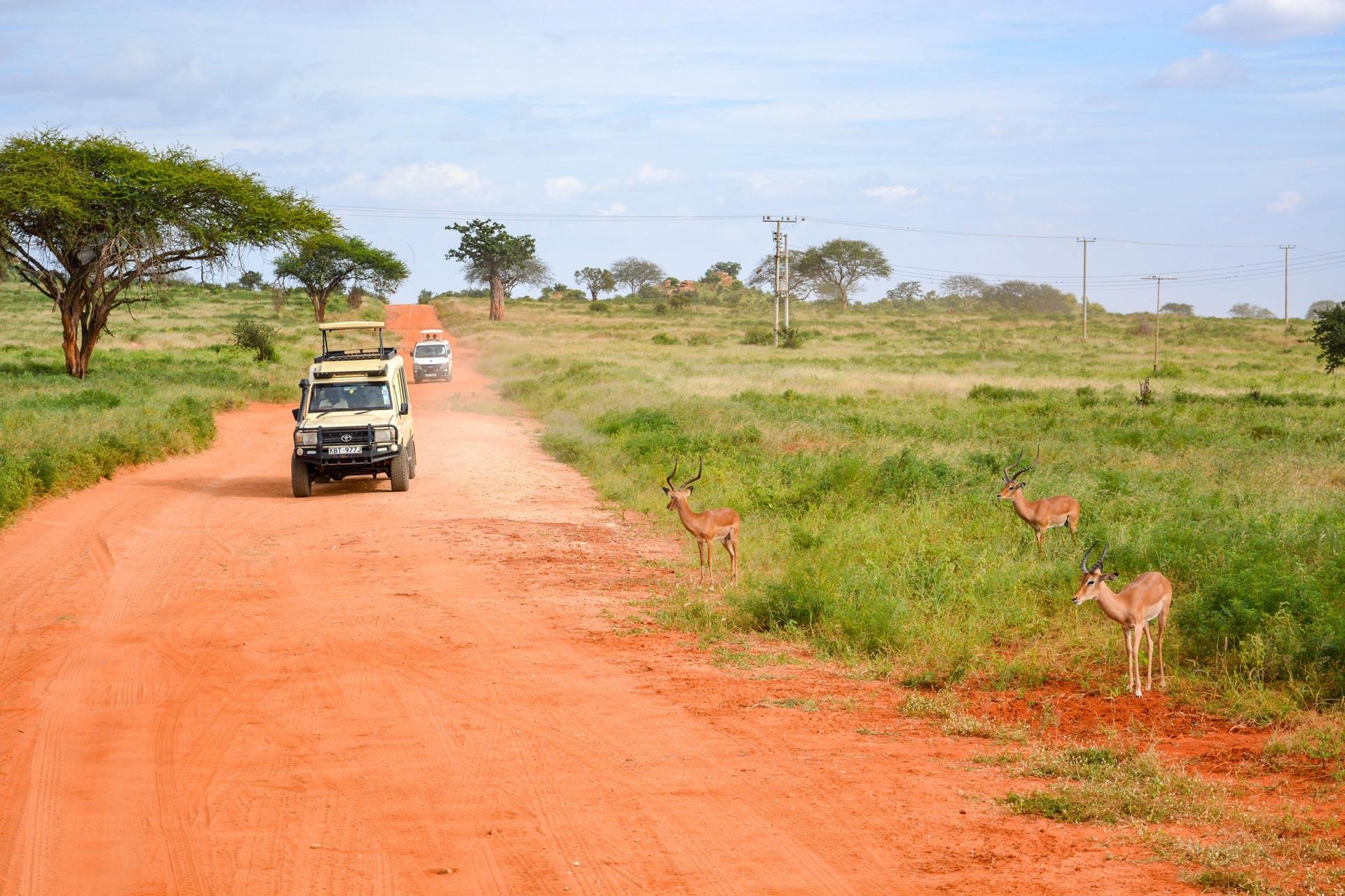9 Days Serengeti Wildebeest Migration Safari