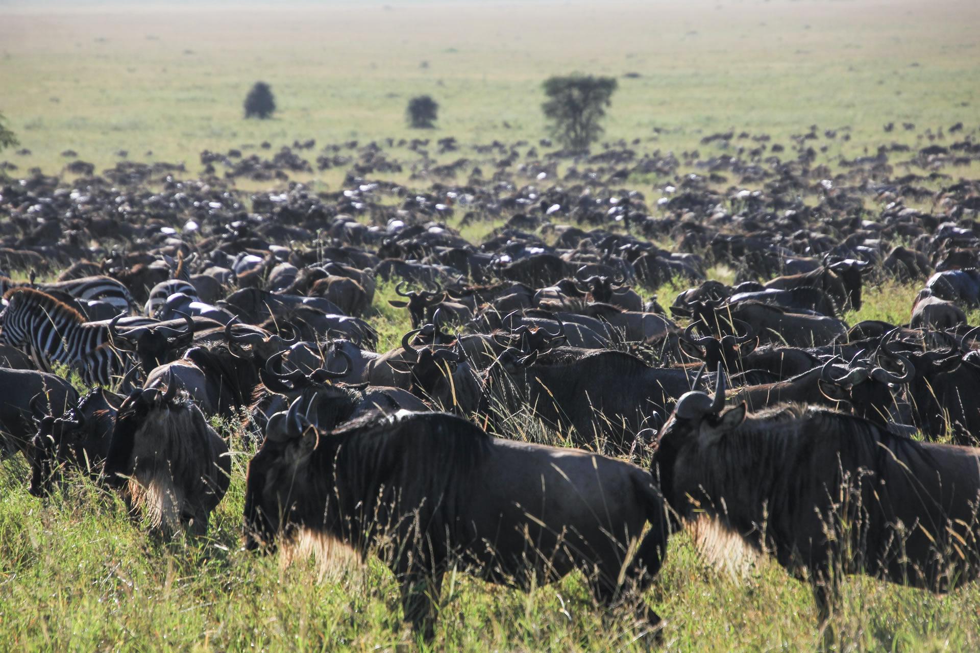4 Days Tanzania Family Safari