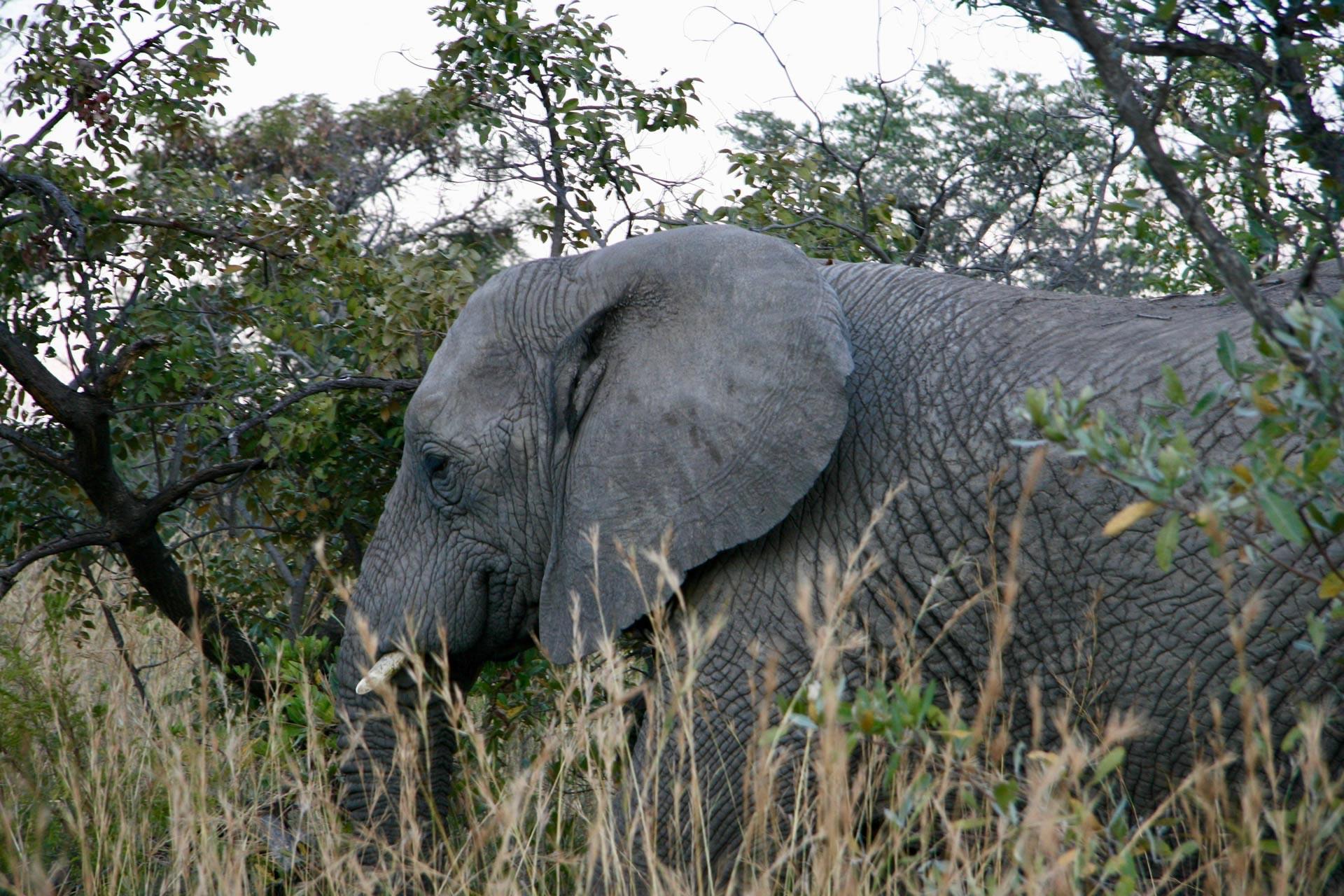 9 Days Kogatende Migration Safari