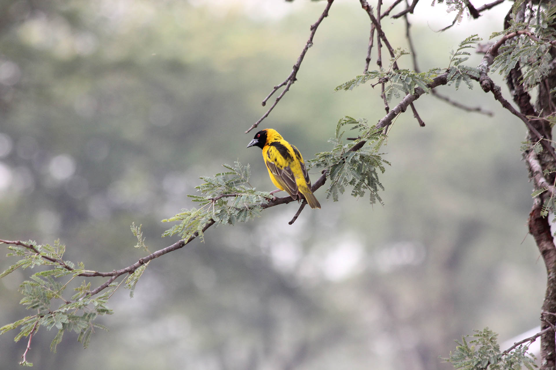 9 Days Mikumi, Ruaha and Selous Safari