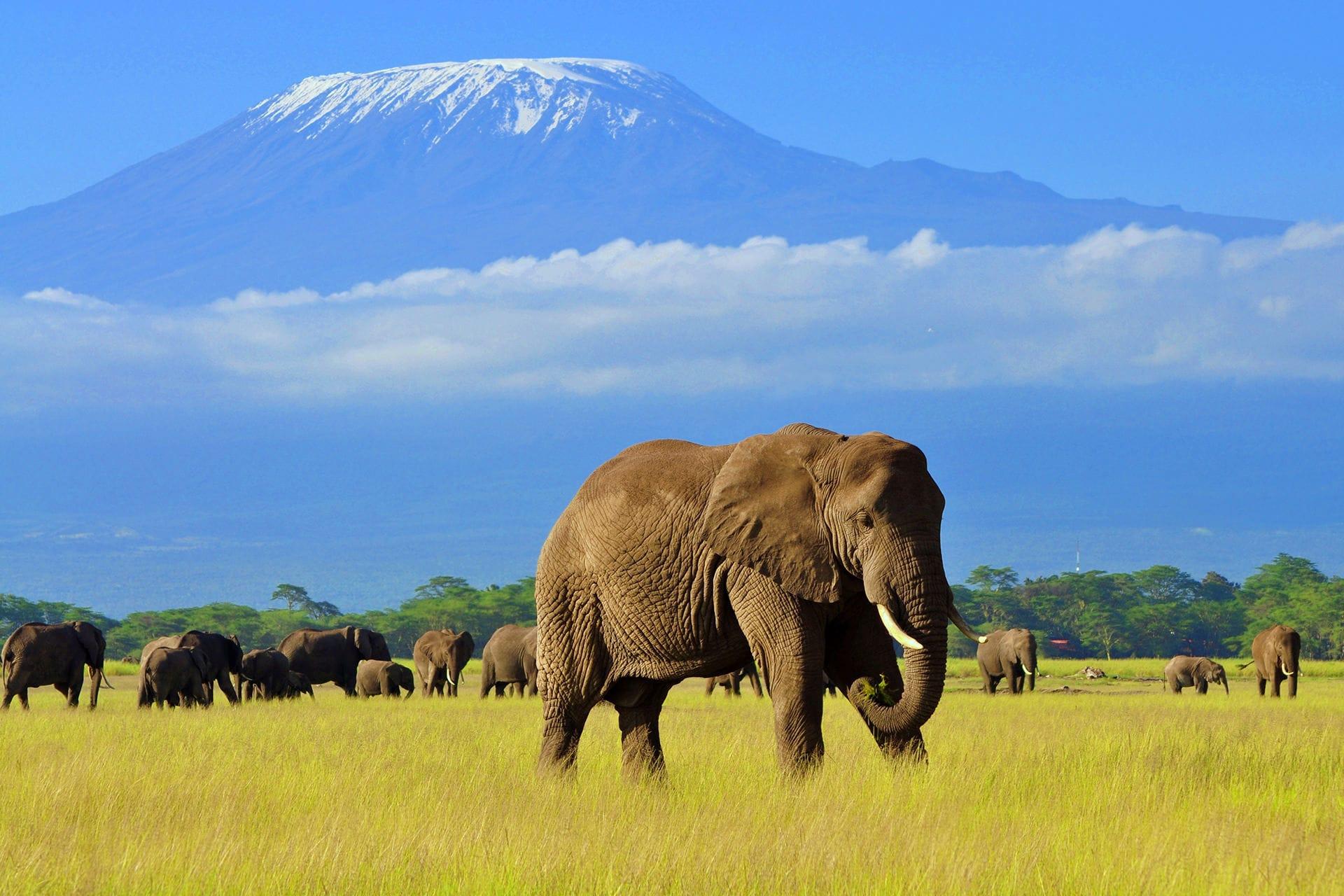 11 Days kenya and Northern Encounter Safari