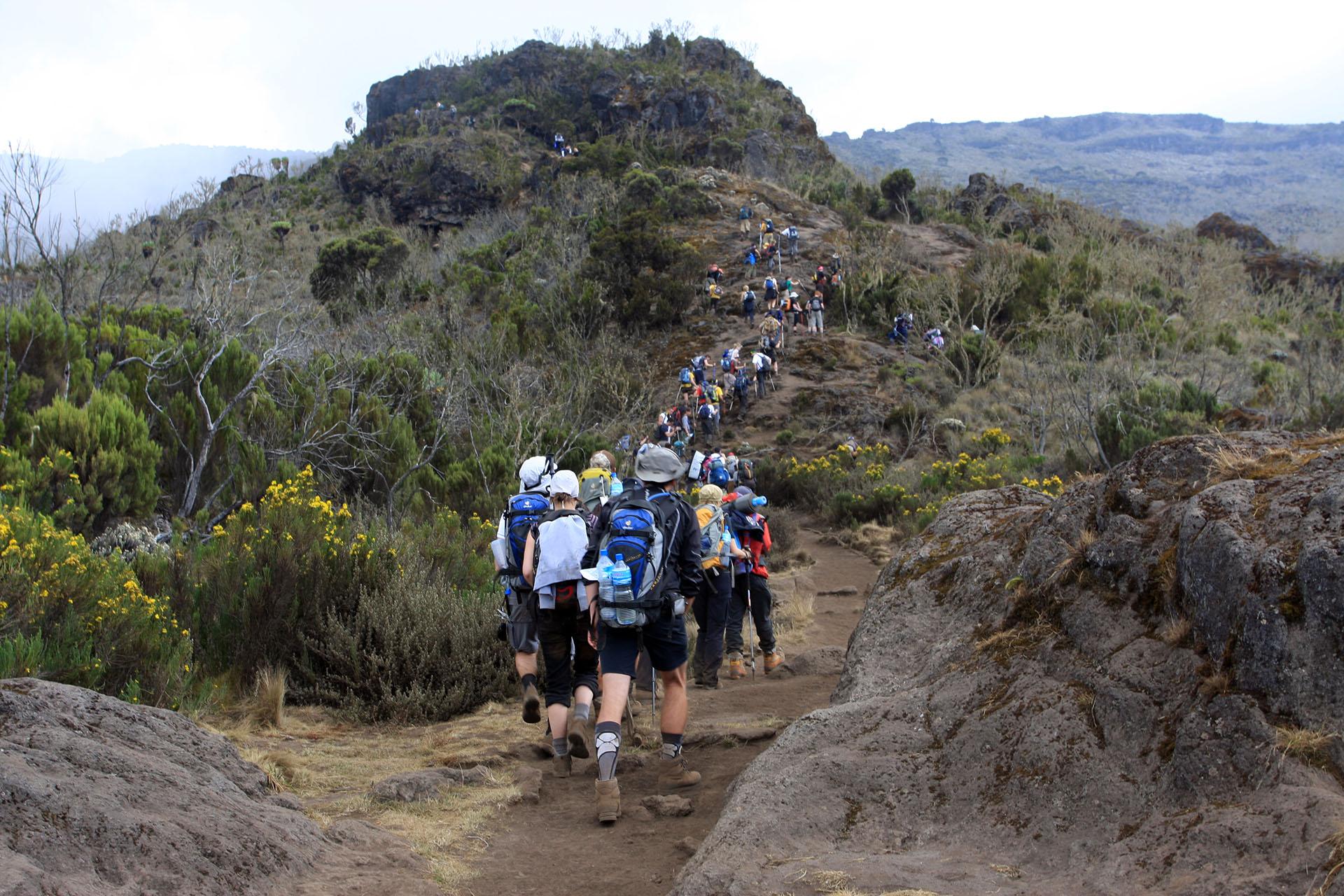 1 Day Kilimanjaro Trek