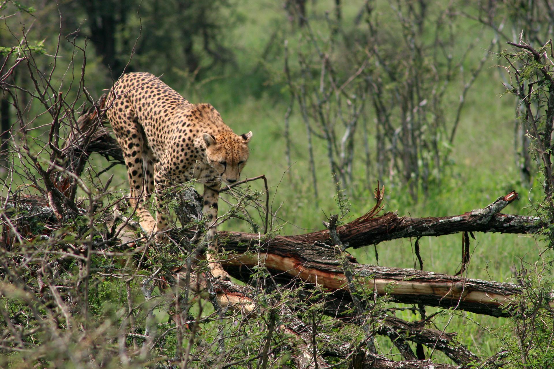5 Days Selous and Mikumi Safari