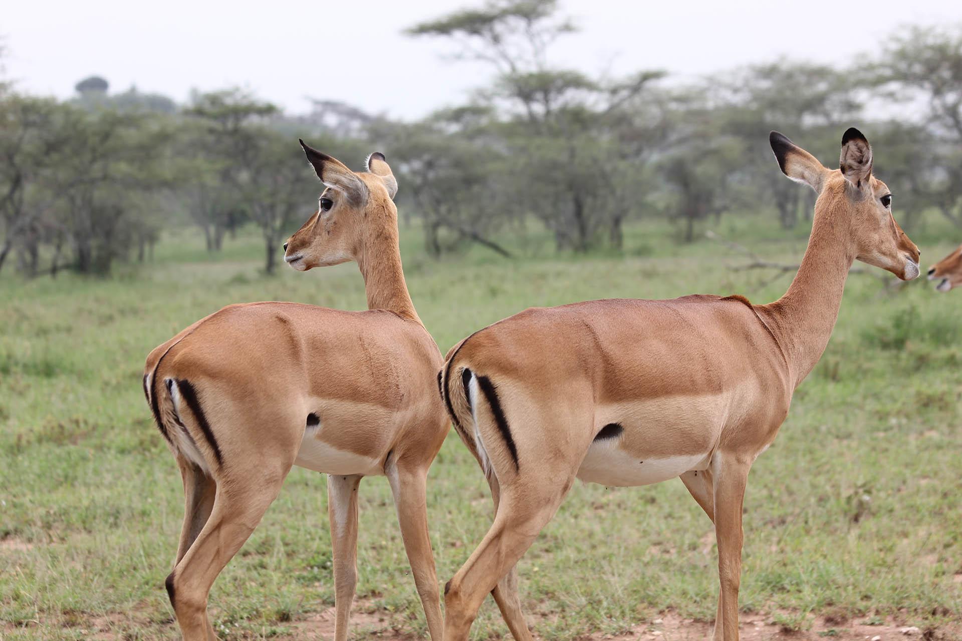 Amazing 5 Days Ruaha Safari