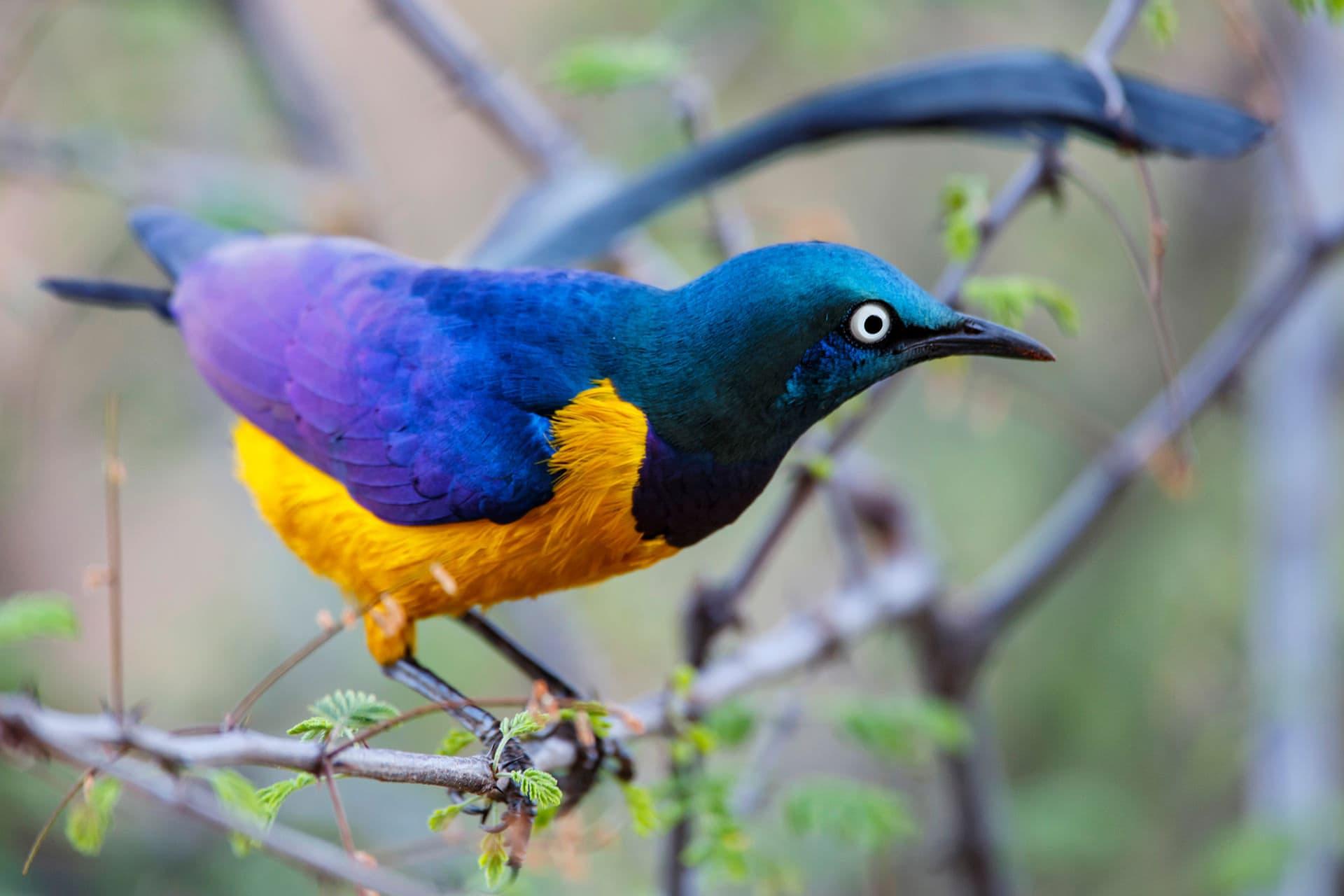 10 Days Kenya and Tanzania Wildlife Safari