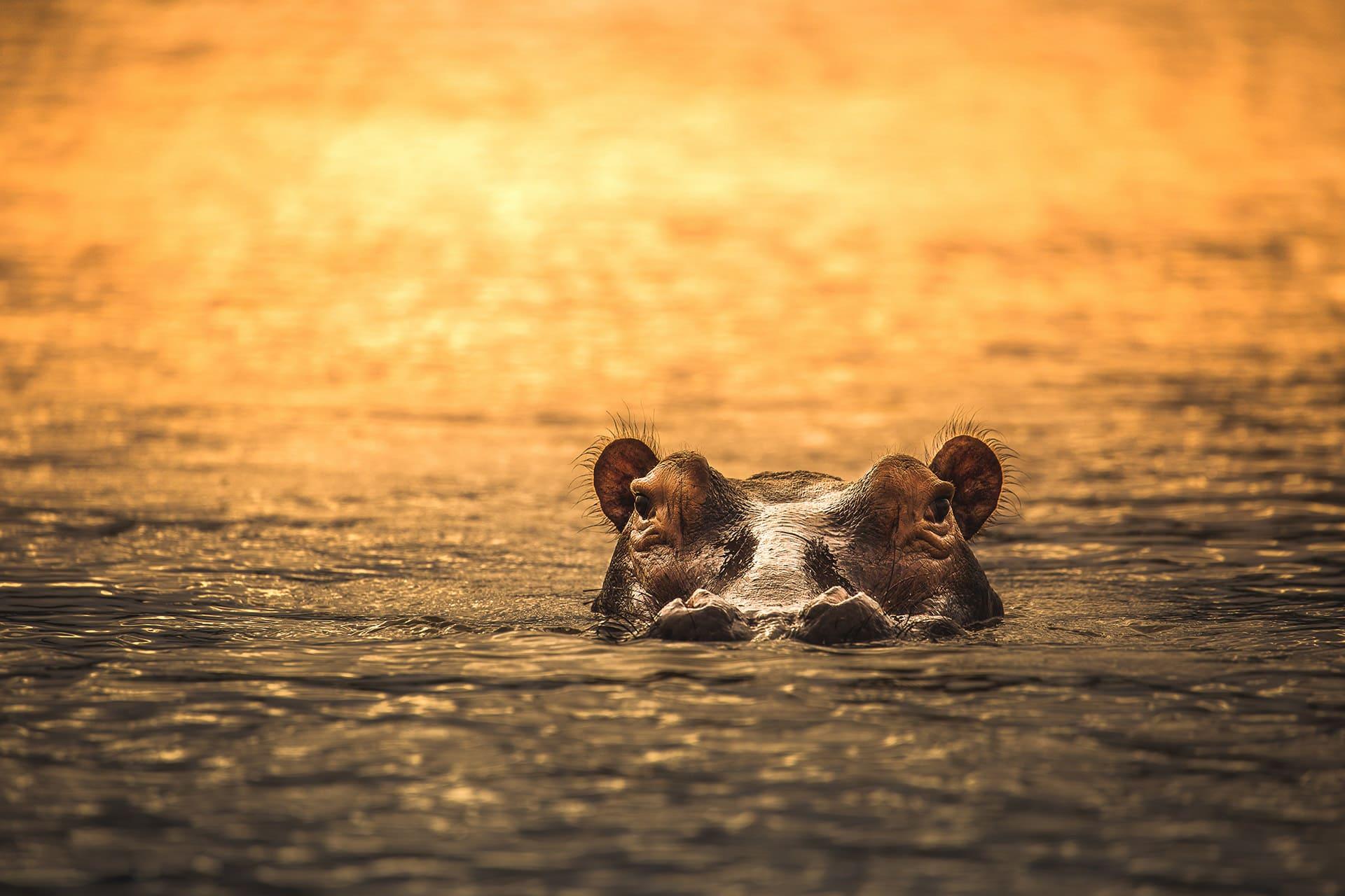 13 Days Big African Wildlife Safari Adventure