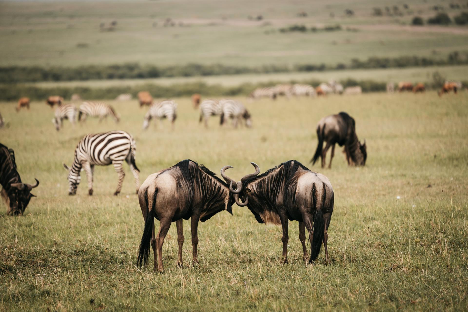 10 Days Kenya Safari and Zanzibar Beach Tour
