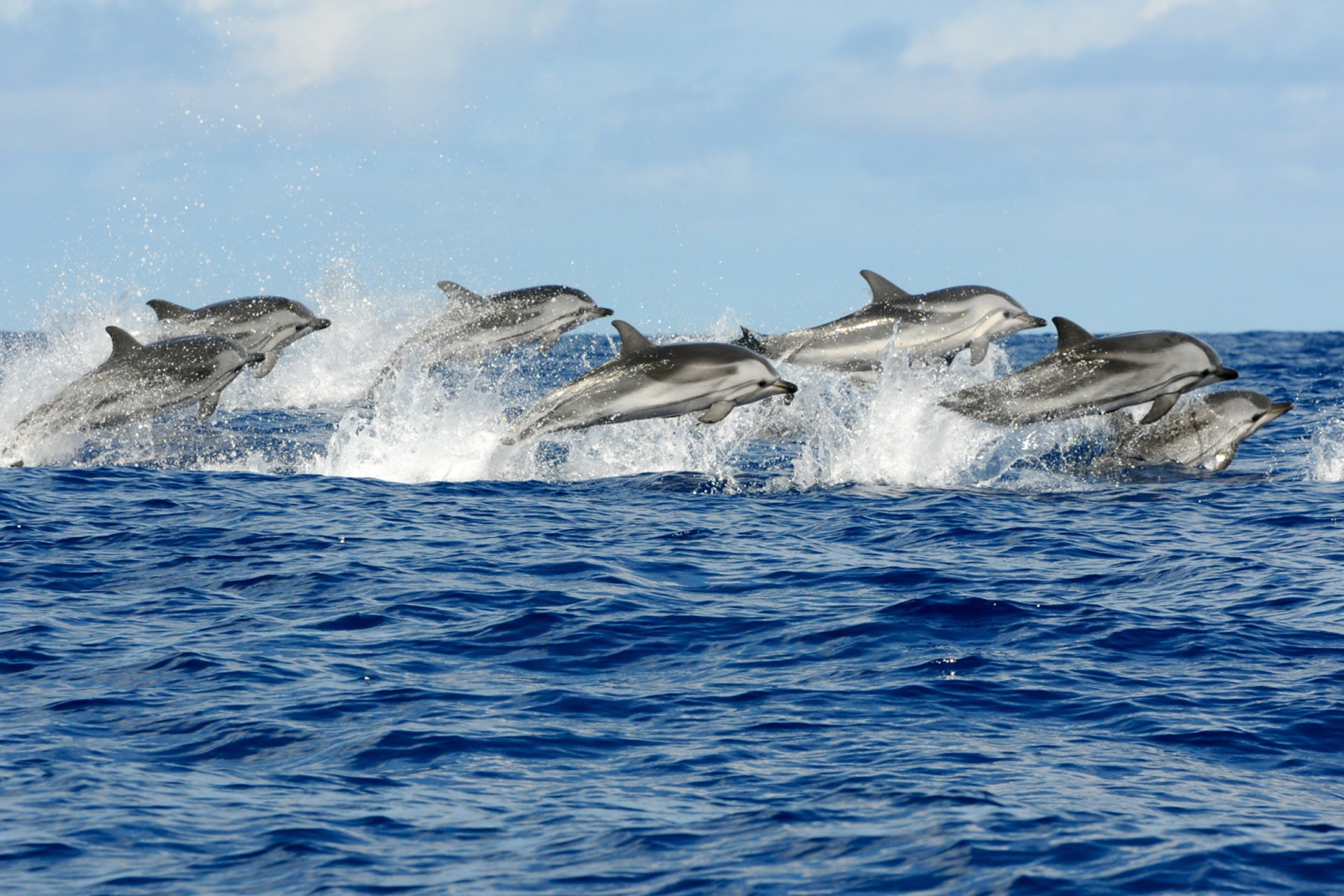 1 Day Dolphin Snorkeling & Jozani Forest