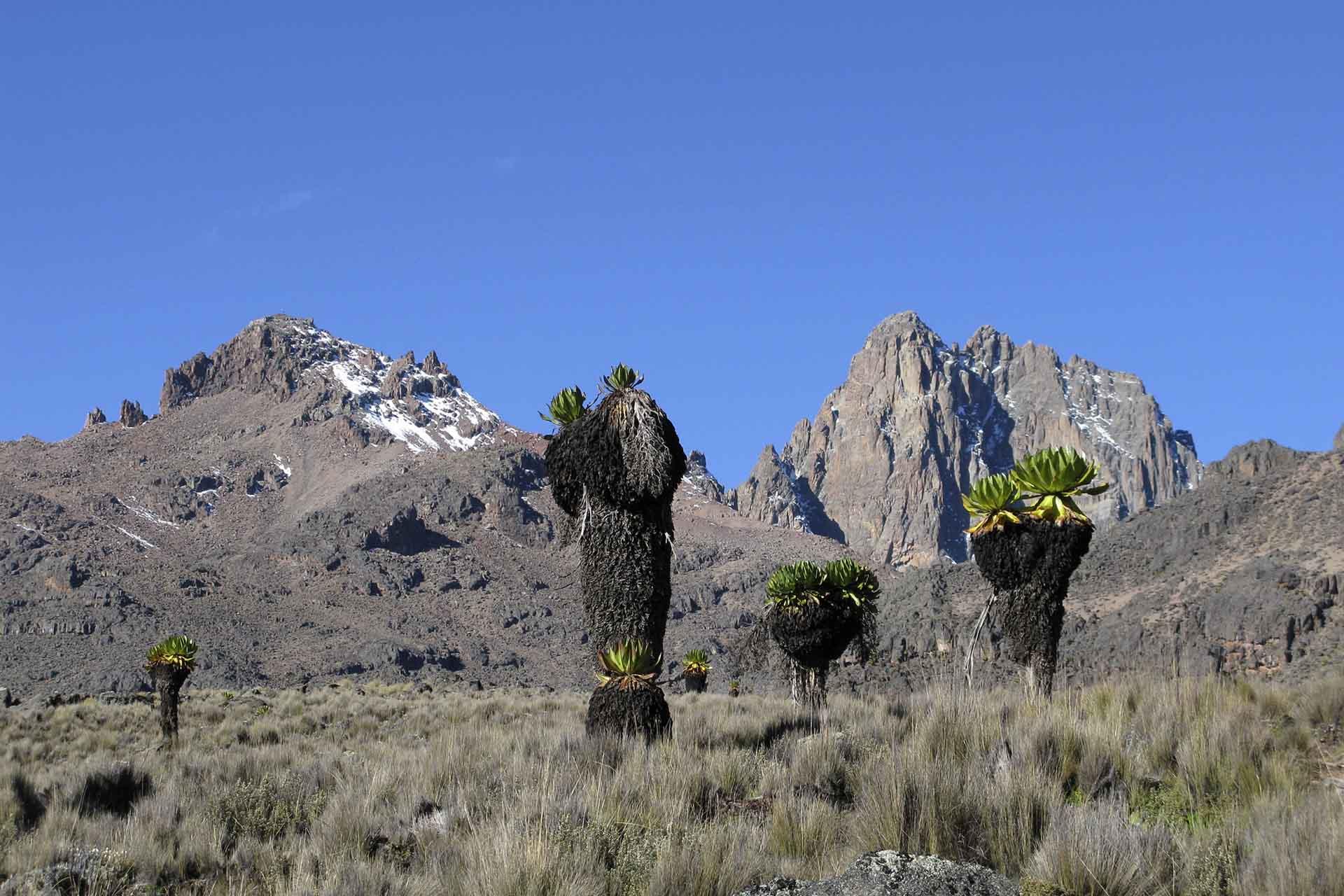 4 Days Mount Kenya Climb Sirimon Route